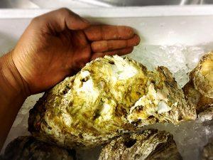 デカイ 岩牡蠣 天然物